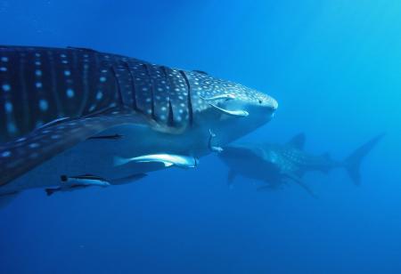 AHE Diving,Insel Ahe,West Papua,Allgemein,Indonesien