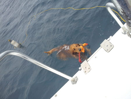 Dive Experience,St. Croix,Amerikanische Jungferninseln