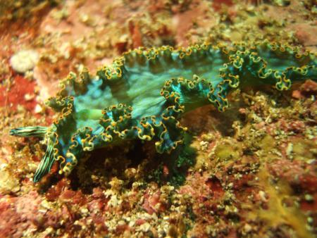 Herradura Divers,Costa Rica