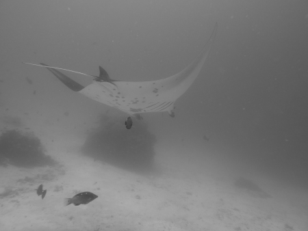 Raja Ampat Biodiversity Eco Resort,Allgemein,Indonesien