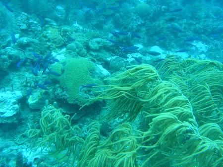 Northern Exposure,Grenada