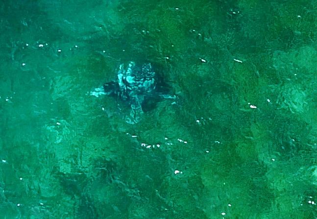 Manta am Stammtisch (Luftaufnahme)