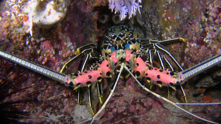 M/Y Saman Explorer,Extra Divers Mirbat,Oman
