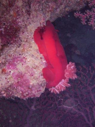 The Oasis,Diving Centers Werner Lau/Sinai Divers,Marsa Alam,Marsa Alam und südlich,Ägypten