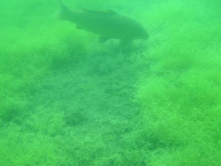 Delphin,Leipzig,Sachsen,Deutschland