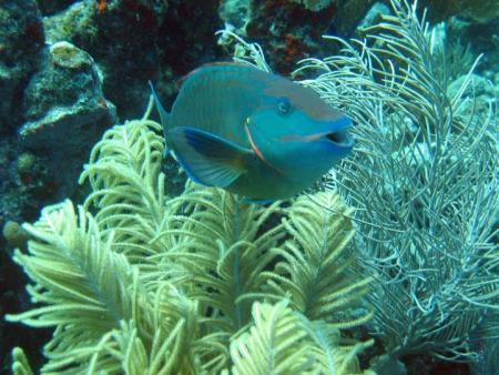 Deep Blue Divers,Utila,Honduras