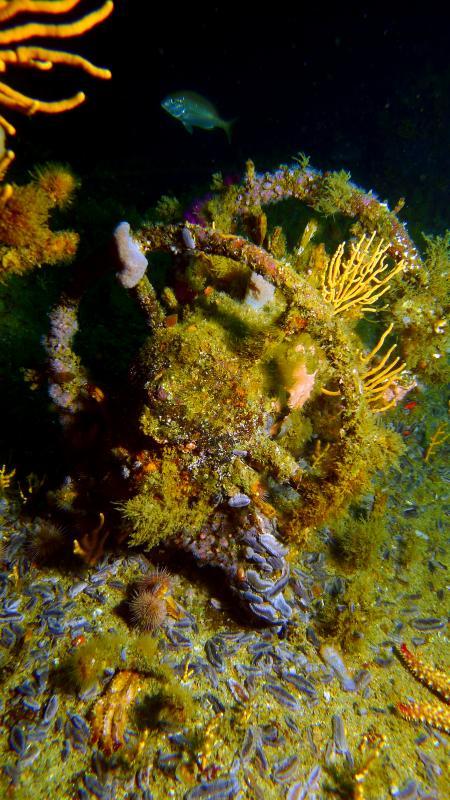 Dive Action Capetown,Südafrika
