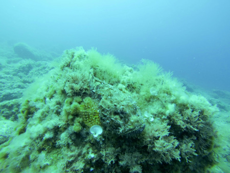 Diving (Center) Punta Mesco,Levanto,Italien