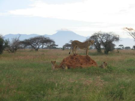 Baracuda Scuba Safaris,Kenia