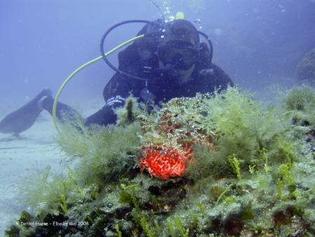 Unica Diving (Elba),Italien