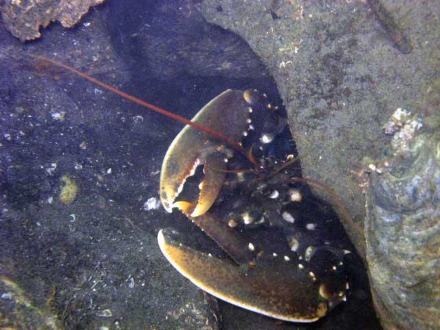 Scharendijke, Reef Balls, Scharendijke,Grevelinger Meer,Niederlande