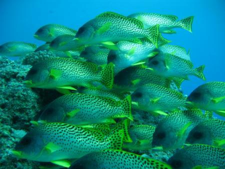 Mäggys Redsea-Divers-Hurghada,Hurghada,Ägypten