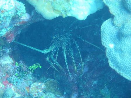 Octopus Diving Center,St. Martin
