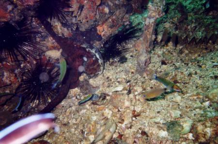Sea-Bees,Chalong/Phuket,Andamanensee,Thailand