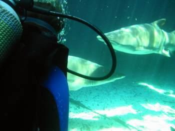 Kapstadt,Two Oceans Aquarium,Südafrika