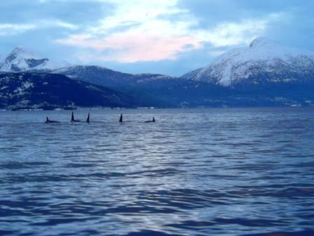ORCA - Norway,Norwegen