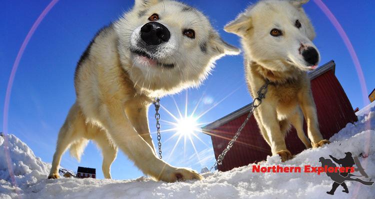 Northern Explorers - Tasiilaq (East Greenland), Ostküste Tasiilaq (East Greenland),Grönland,Eisberge,Hunde