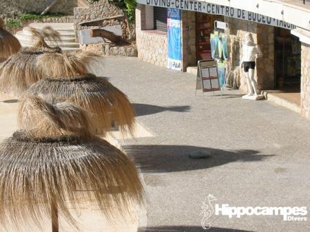 Hippocampes,Illeta,Mallorca,Balearen,Spanien