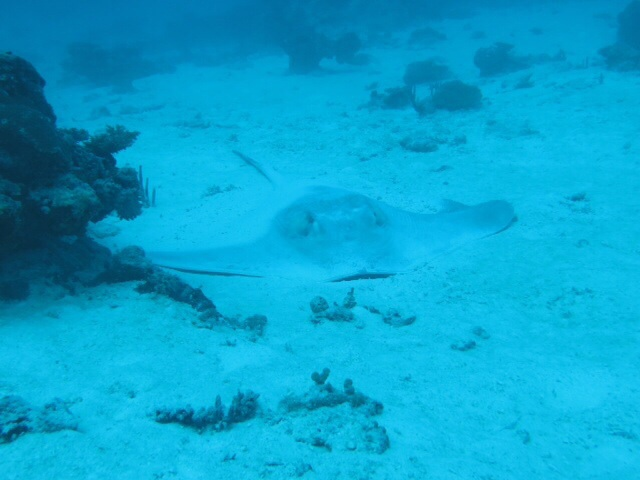 Dive Ocean, Bodu Hithi Coco Palm, Nord Male Atoll, Malediven