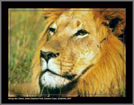 Addo Rest Camp,Addo Elephant Park,Südafrika