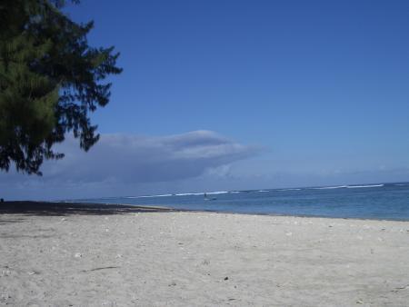 Sea-Urchin,Flic en Flac,Mauritius