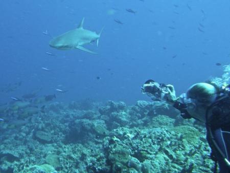 Peleliu Divers,Blue Dolphin Resort,Peleliu Island,Palau