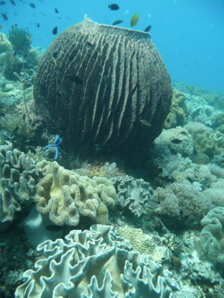 Coco White Beach Resort,Basdio Guindulman,Bohol,Philippinen