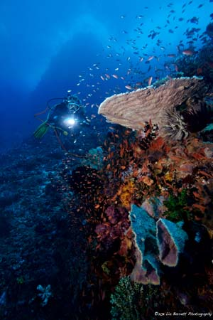 Korallenriff, Wicked Diving, Komodo, Labuan Bajo, Indonesien, Allgemein
