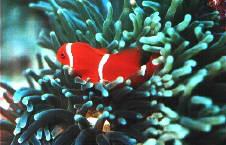 Code Hole, Cod Hole,Great Barrier Reef,Australien