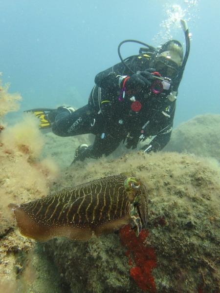 Atlantic Diving,Puerto de Mogan,Gran Canaria,Kanarische Inseln,Spanien