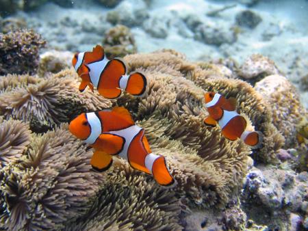 Celebes Divers Manado,Sulawesi,Indonesien