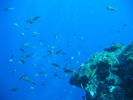 Tauchpartner La Palma,Kanarische Inseln,Spanien