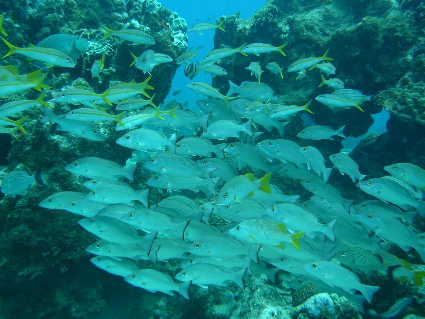 Bonaire, Bonaire,Niederländische Antillen,schwarm