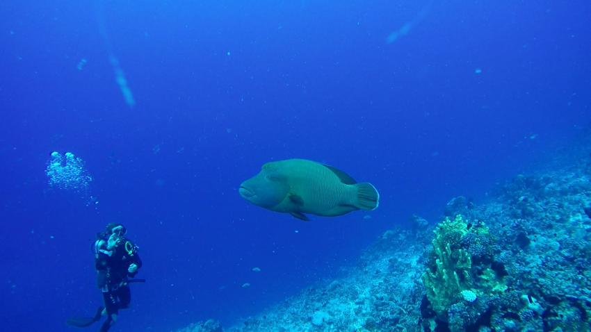 Der Wächter vom Tiputa Pass, The Six Passengers Diving Center, Rangiroa, Französisch-Polynesien