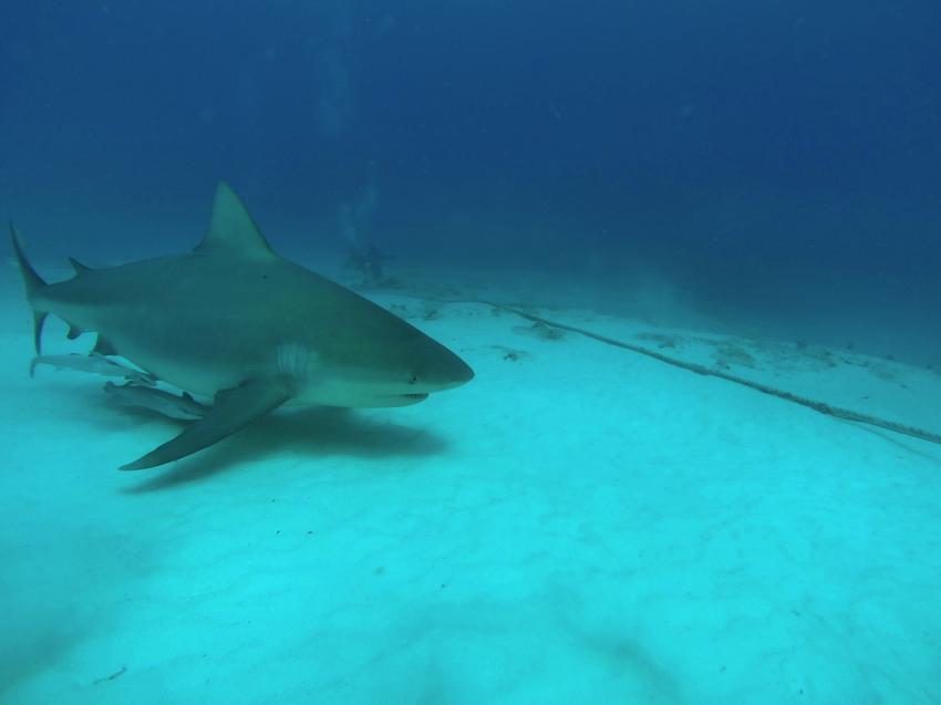 Bull Shark Diving, Deep Dive Mexico, Mexiko