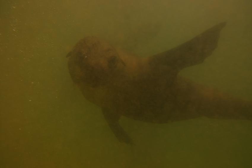 Pro Dive, Plettenberg Bay, Südafrika