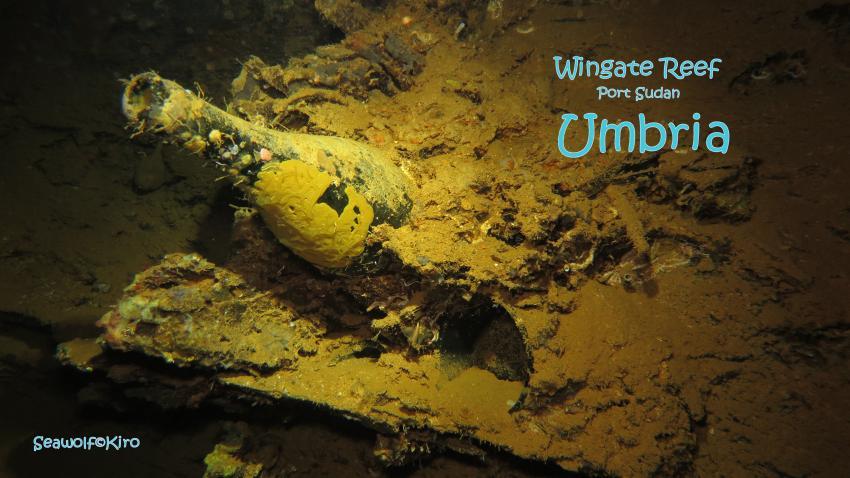 Ladung Umbria: Weinflaschen, Umbria Wrack Sudan Port Sudan Seawolf Diving, Safari Dominator, Hans Hass, Umbria, Wingate Reef, Sudan
