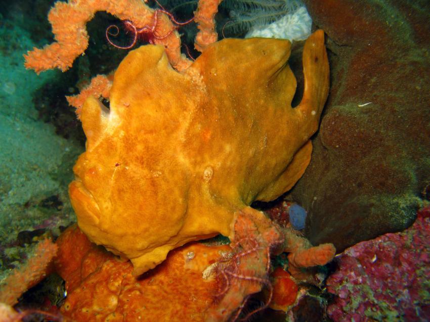 Unterwegs mit den Gangga Divers