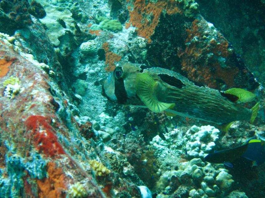 Dive Seychelles, Beau Vallon Bay (ex Island Ventures), Seychellen