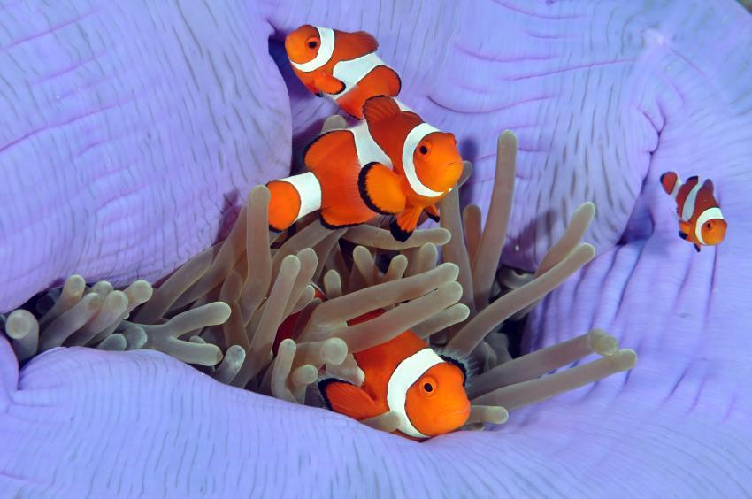 Seaquest Dive Center, Bohol, Philippinen