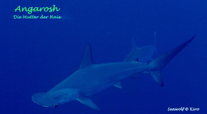 Angarosh - Die Mutter der Haie, Seawolf Diving Safari Dominator Sudan Mutter der Haie Hammerhai Riffkarte Skizze Port Sudan, M/Y Seawolf Dominator (Sudan), Sudan