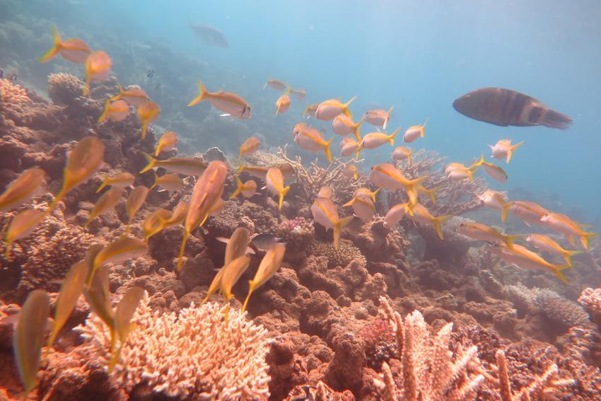 Scuba World Divers Makadi Bay_Hausriff_1, Tauchen in der Makadi Bay, Scuba World Divers Makadi Bay, Ägypten, Hurghada