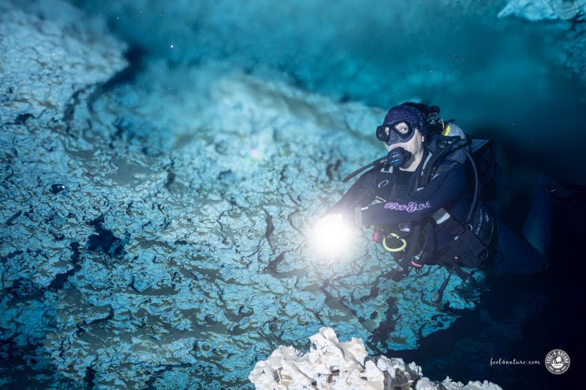 Cenoten Tauchen in der Halocline, Cenote Adventures, Mexiko