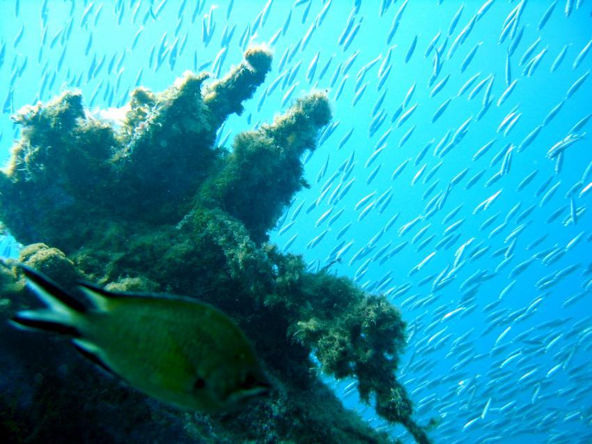 Lanzarote Wracks Punta Fariones, Lanzarote Wracks Punta Fariones,Spanien