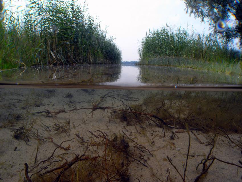 Barleber See, Barleber See,Magdeburg,Sachsen-Anhalt,Deutschland,Sachsen Anhalt,Ufer,halb&halb Aufnahme