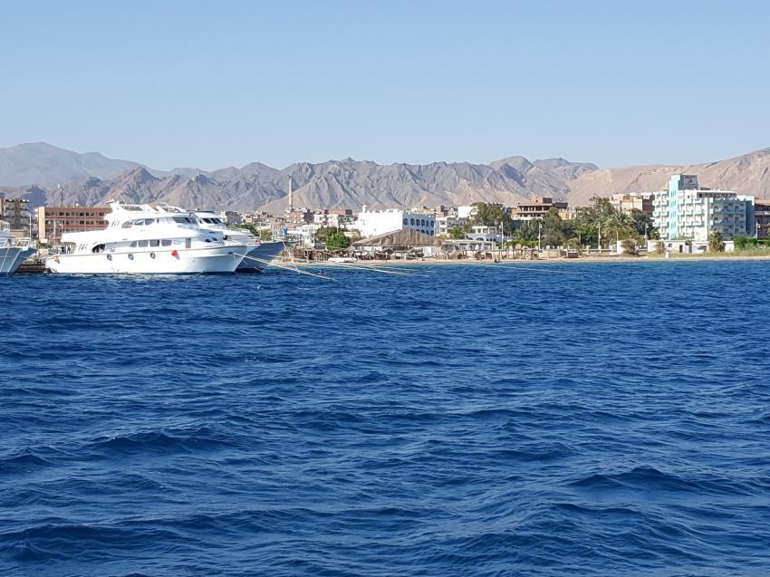Hany Dolphin Blue, Ägypten, Safaga