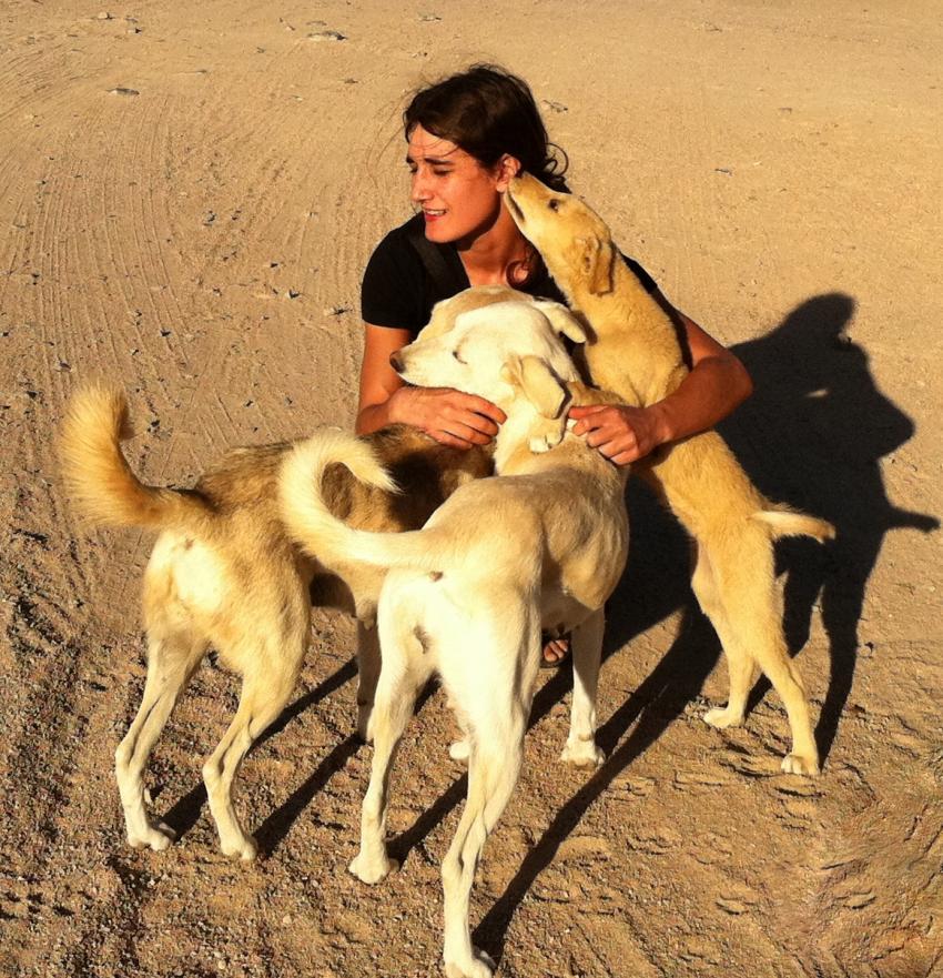 Sezial 2011, Abu Kafan = Sha´ab Shear (Safaga),Ägypten