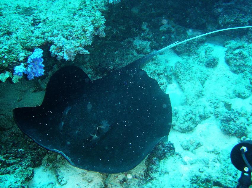 Amba Tauchsafari - Haa Alifu Atoll, Haa Alifu Atoll,Malediven