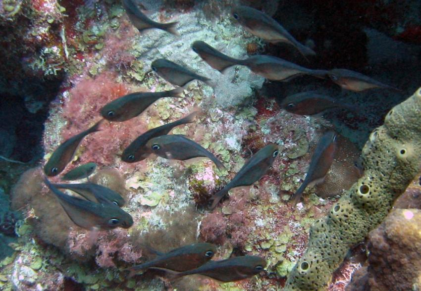 rund um West Punt, West Punt,Curaçao,Niederländische Antillen