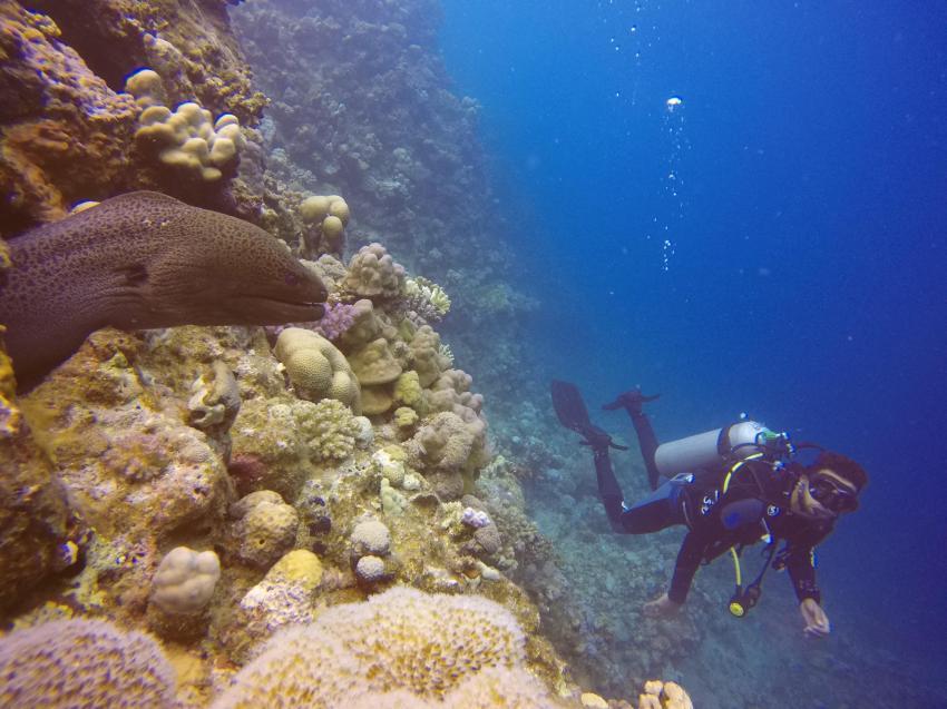 Scuba World Divers SuneoClub Reef Marsa_4, Tauchen Ägypten Marsa Alam, Scuba World Divers, SuneoClub Reef Marsa, Port Ghalib, Ägypten, El Quseir bis Port Ghalib